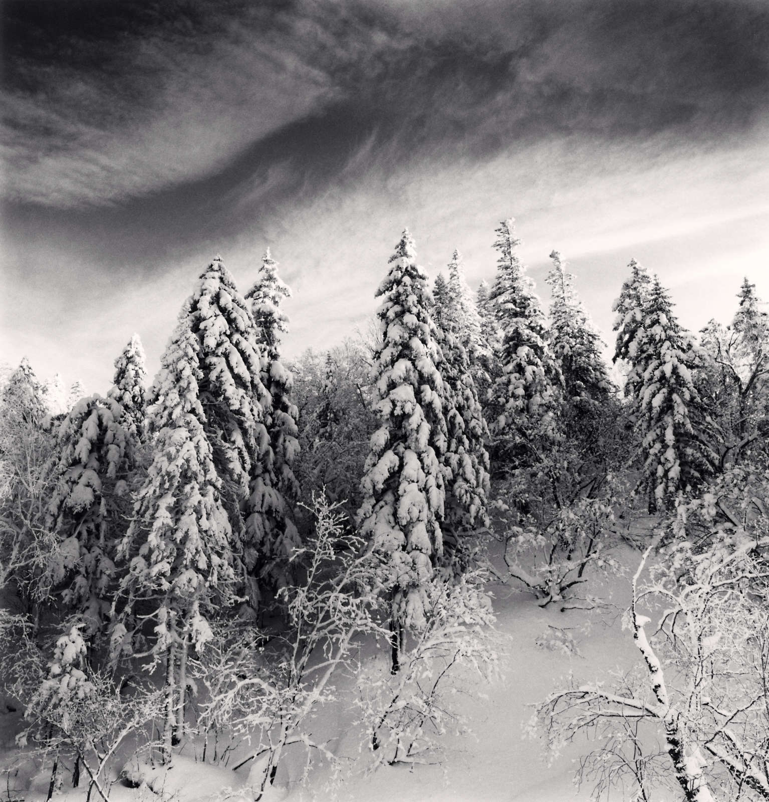 Snow Clad Trees, Heilongjiang, China, 2012