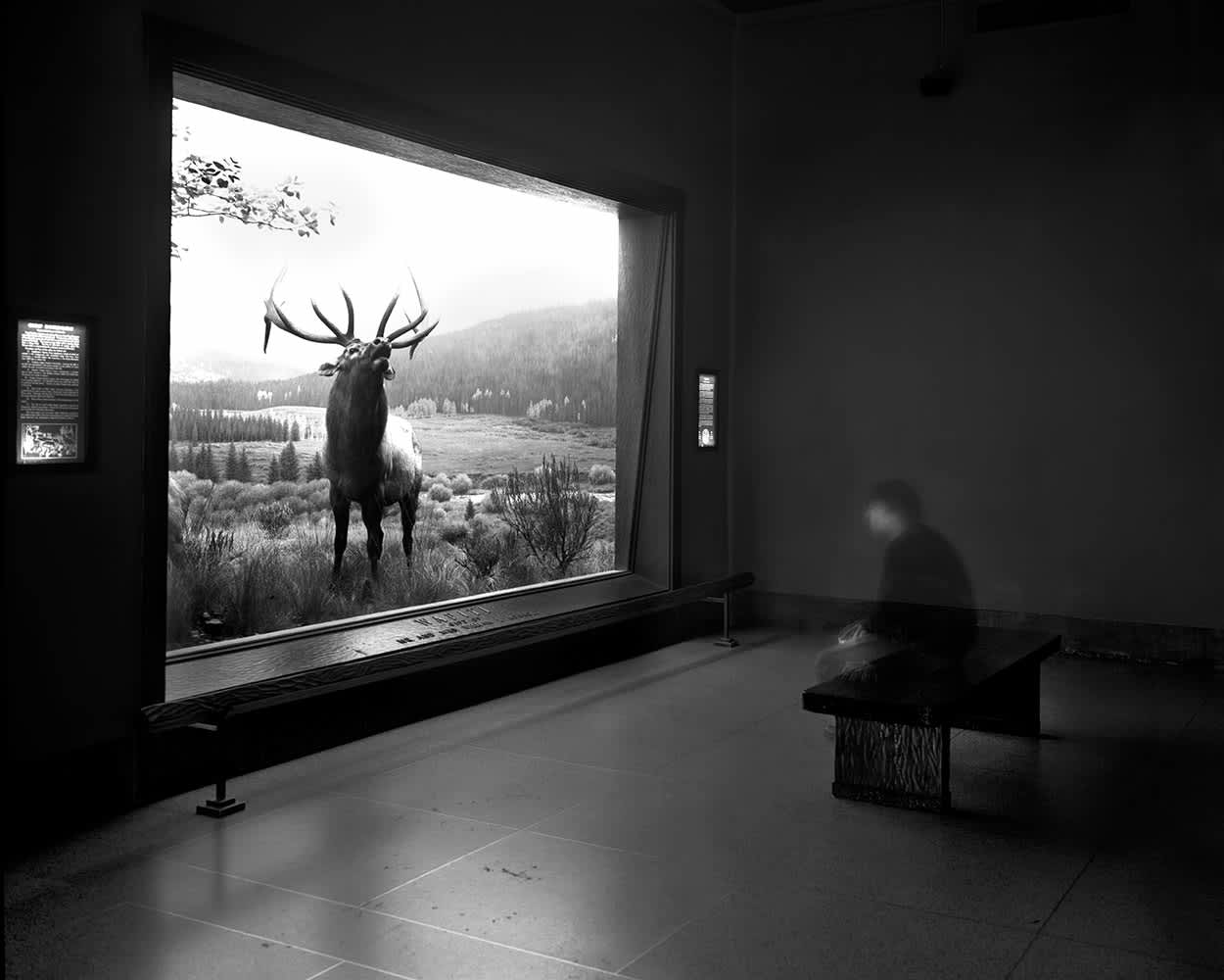 Self Portrait Contemplating Wapiti, Museum of Natural History, NYC, 2004