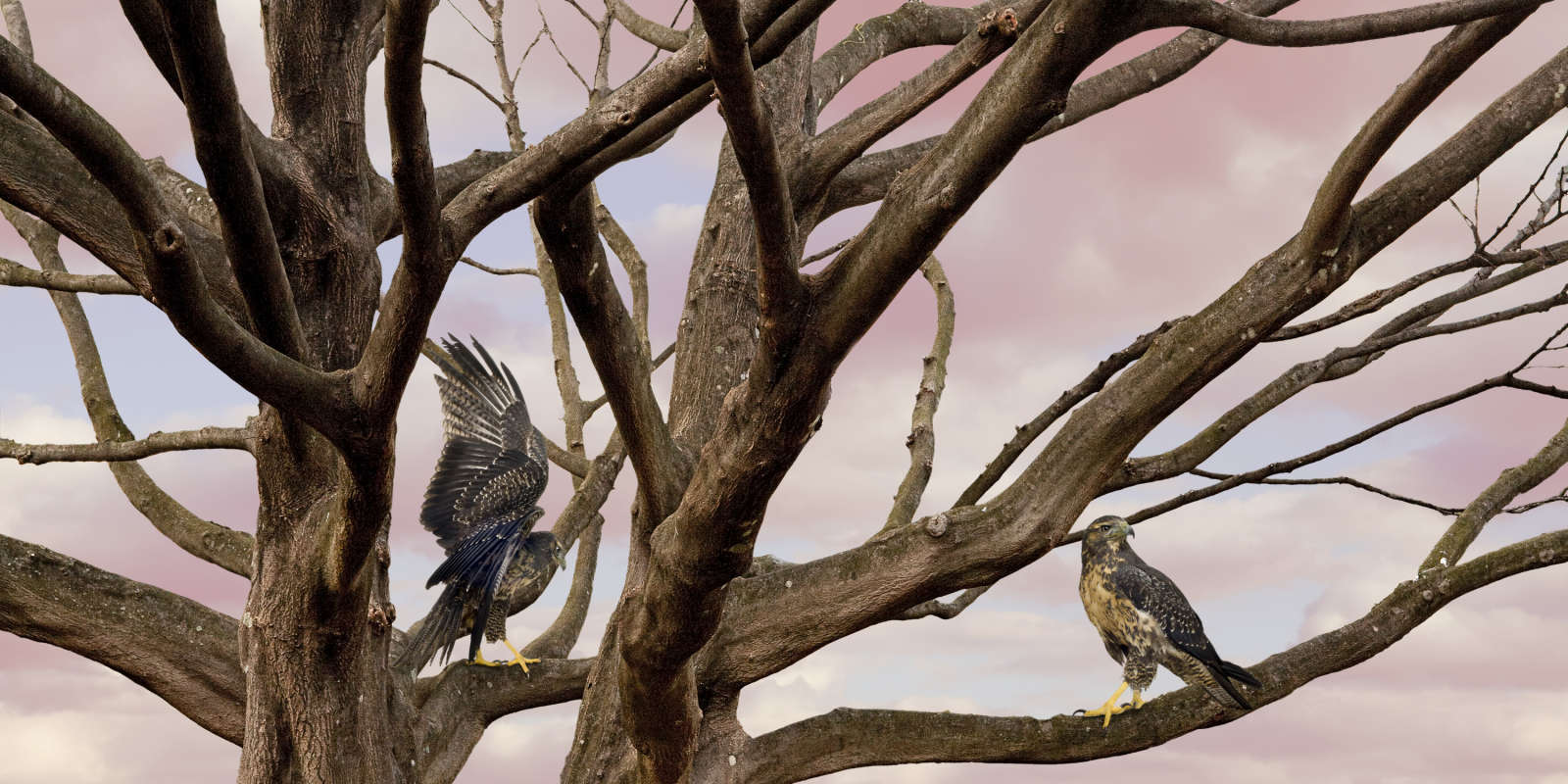 Untitled, Sovereign Tree (eagle branch with clouds)