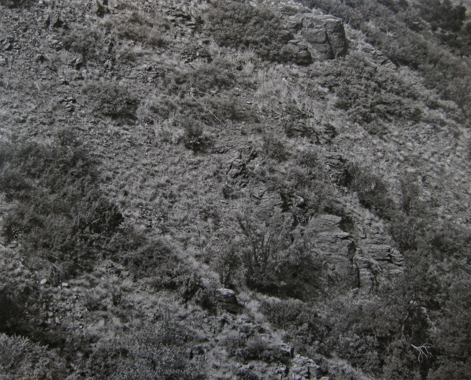 Arizona Landscape (Blood Basin), 1943