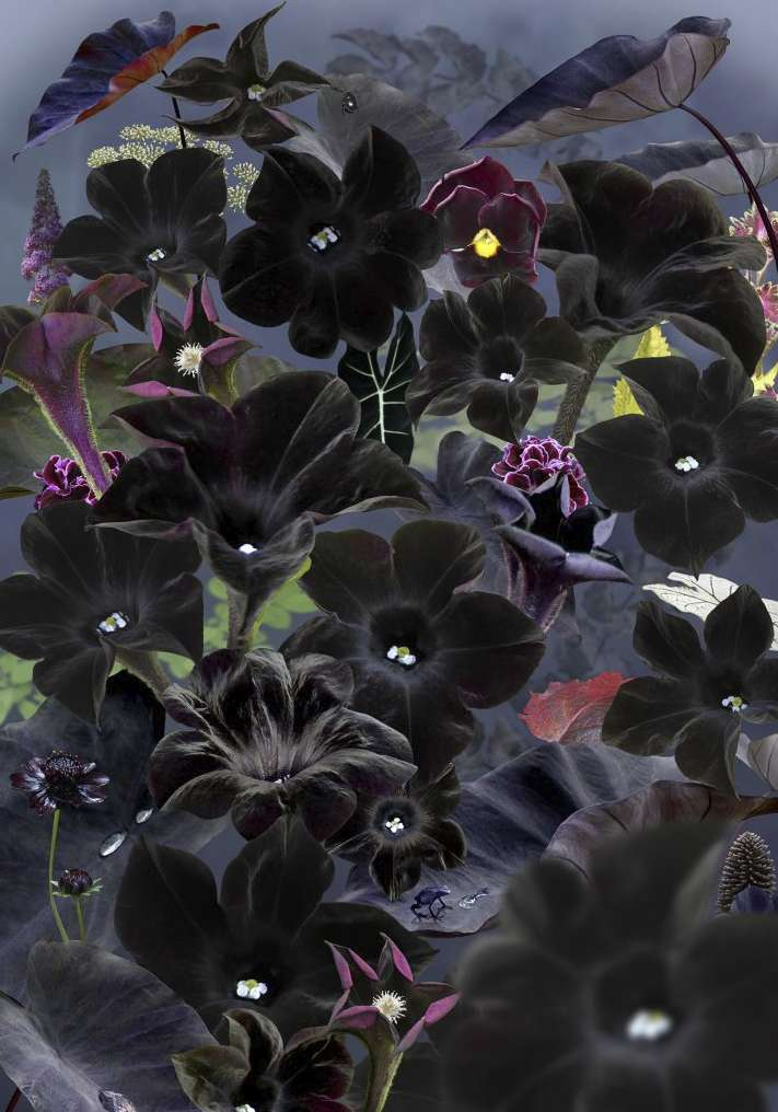 Floresta Negra #1, 2018
