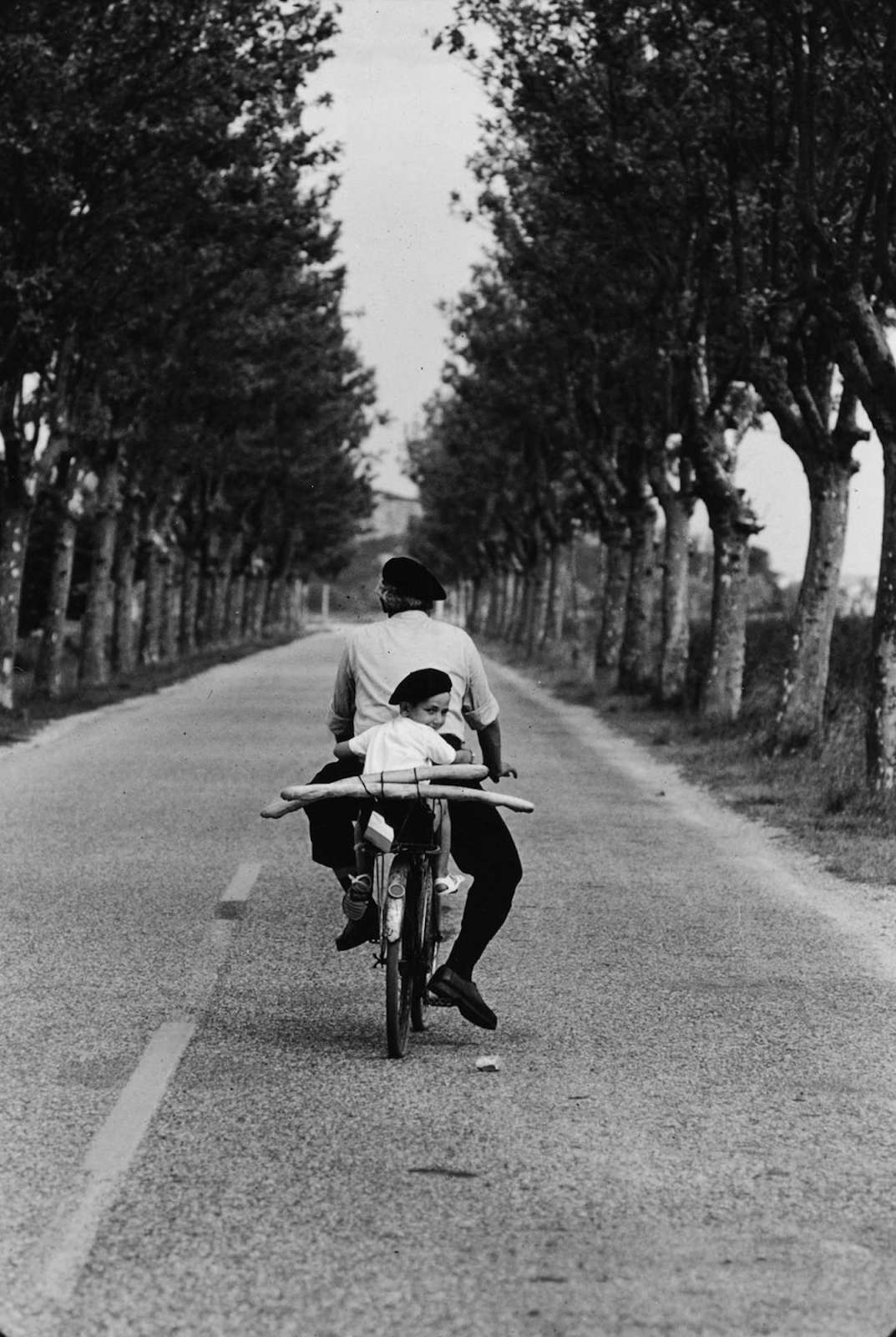 Provence, 1955