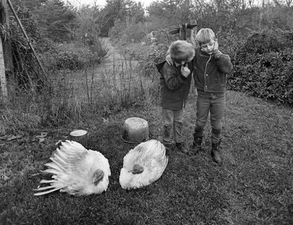 Barry, Dwayne and Turkeys, Danville, Virginia, , 1970