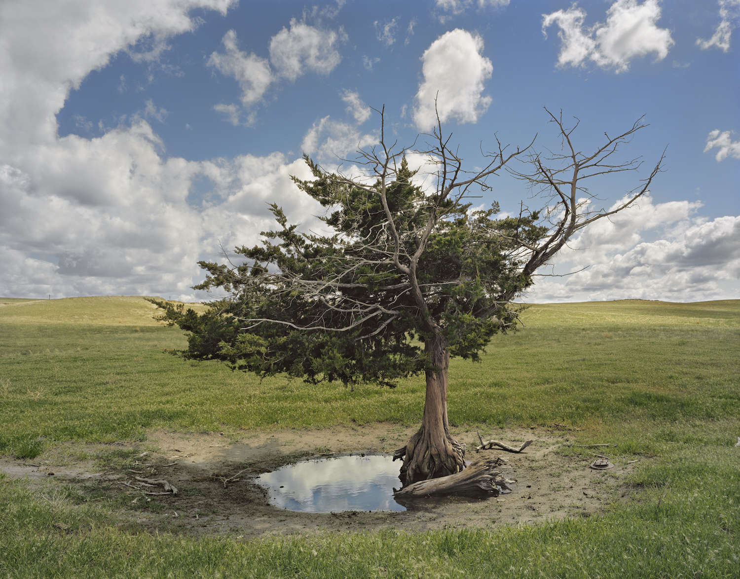 Homesteaders Tree, Cherry County, Nebraska, 2011