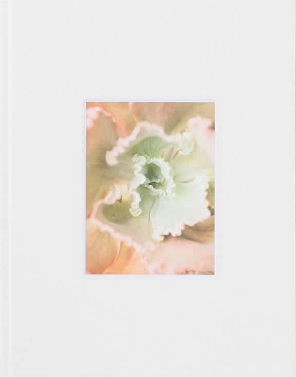 Mona Kuhn / Bushes & Succulents