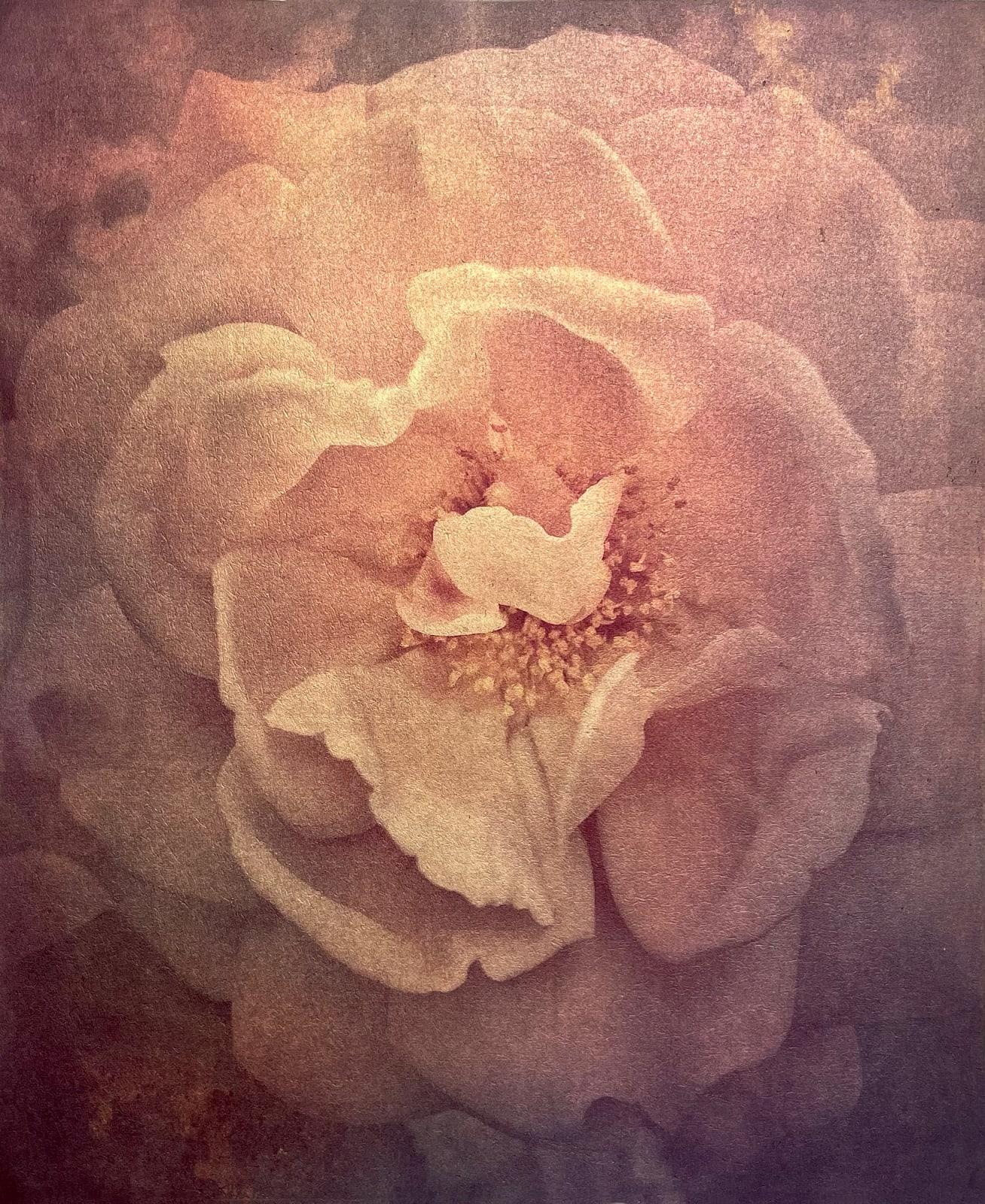 Wendi Schneider, Tudor Rose, 2017