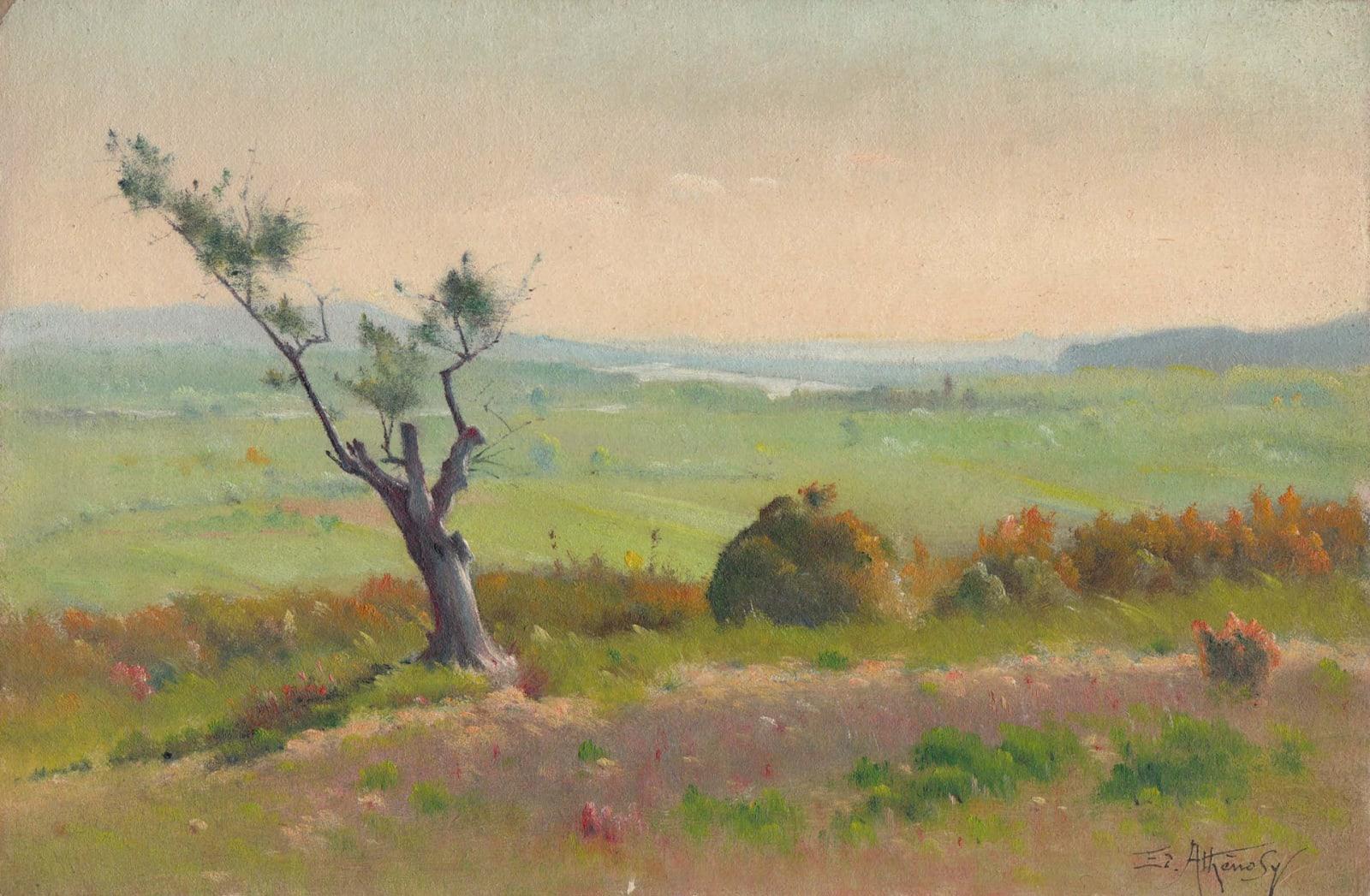 EDOUARD ATHÉNOSY, Olive tree alone, 1928