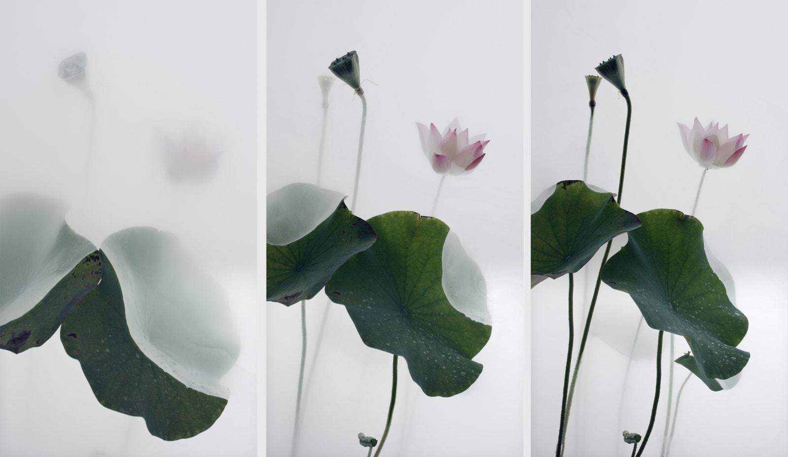 Wu Chi-Tsung 吳季璁, Still Life 010 - Lotus 小品之十 – 荷, 2018