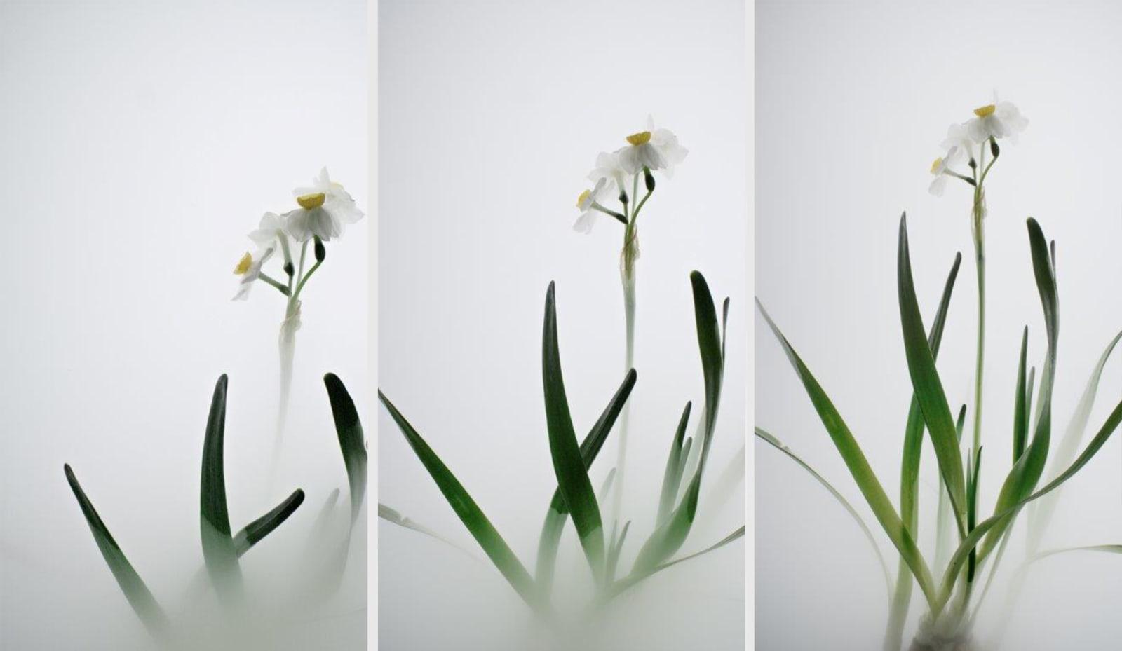Wu Chi-Tsung 吳季璁, Still Life 007 - Daffodil 小品之七 - 水仙, 2018