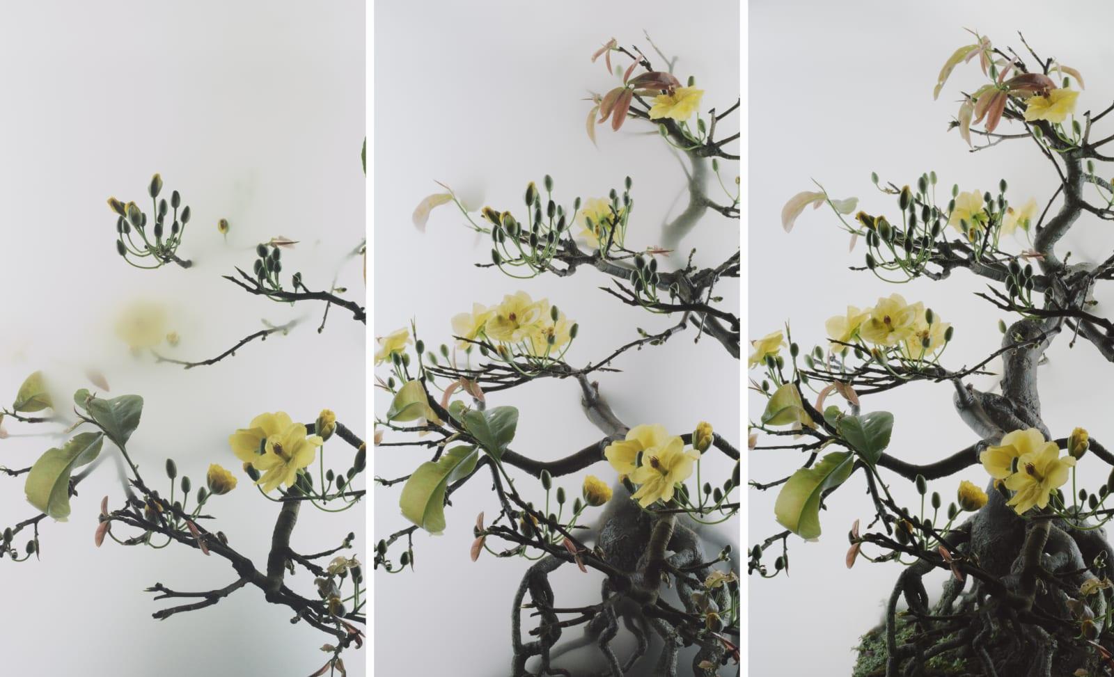 Wu Chi-Tsung 吳季璁, Still Life 014 - Yellow Mai Flower 小品之十四 - 黃梅, 2020