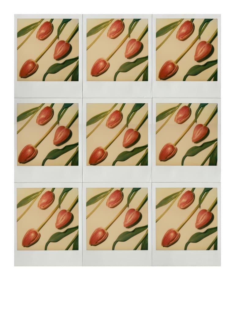 Unglee, Trois tulipes roses, Paris, 1982