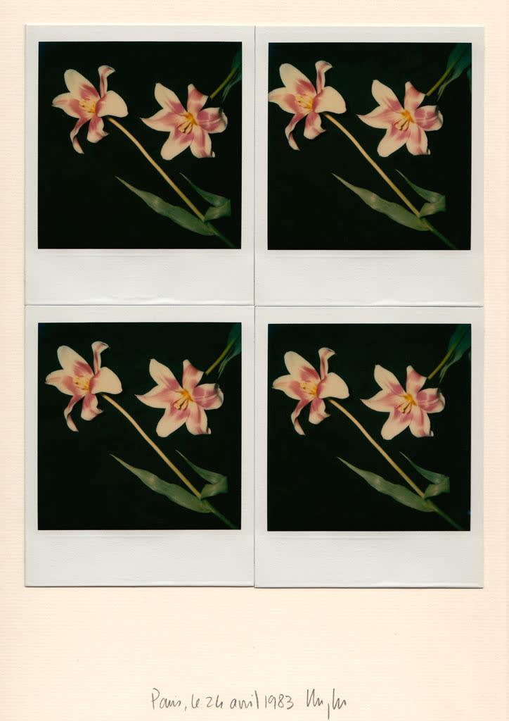 Unglee, deux tulipes mauve et blanc, 1983