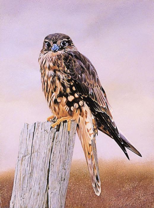 Peter Goodfellow, Female Merlin