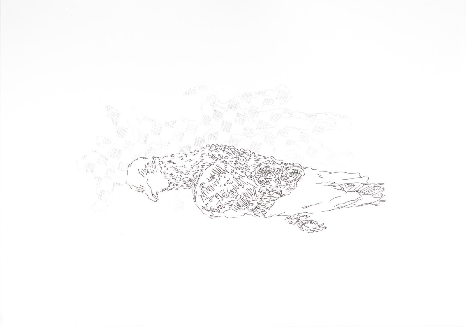 Rowan Dahl, Pigeon 2 (set of 4)