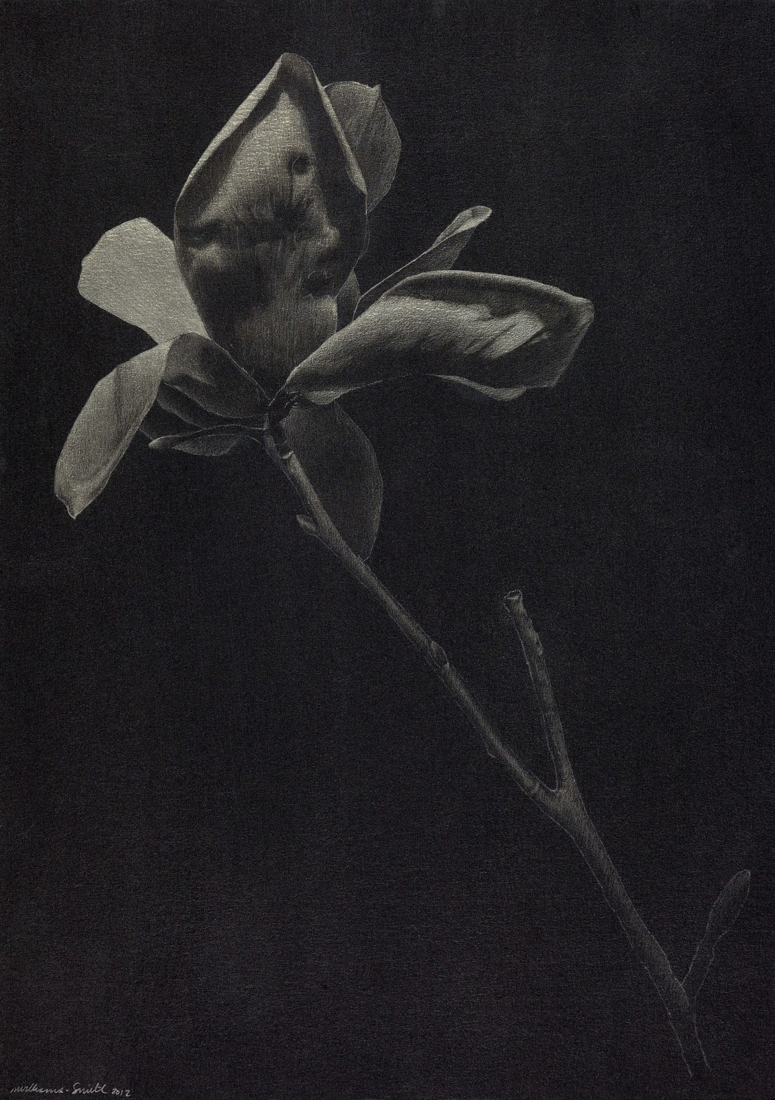 Marjorie Williams-Smith, Uplifted, 2012