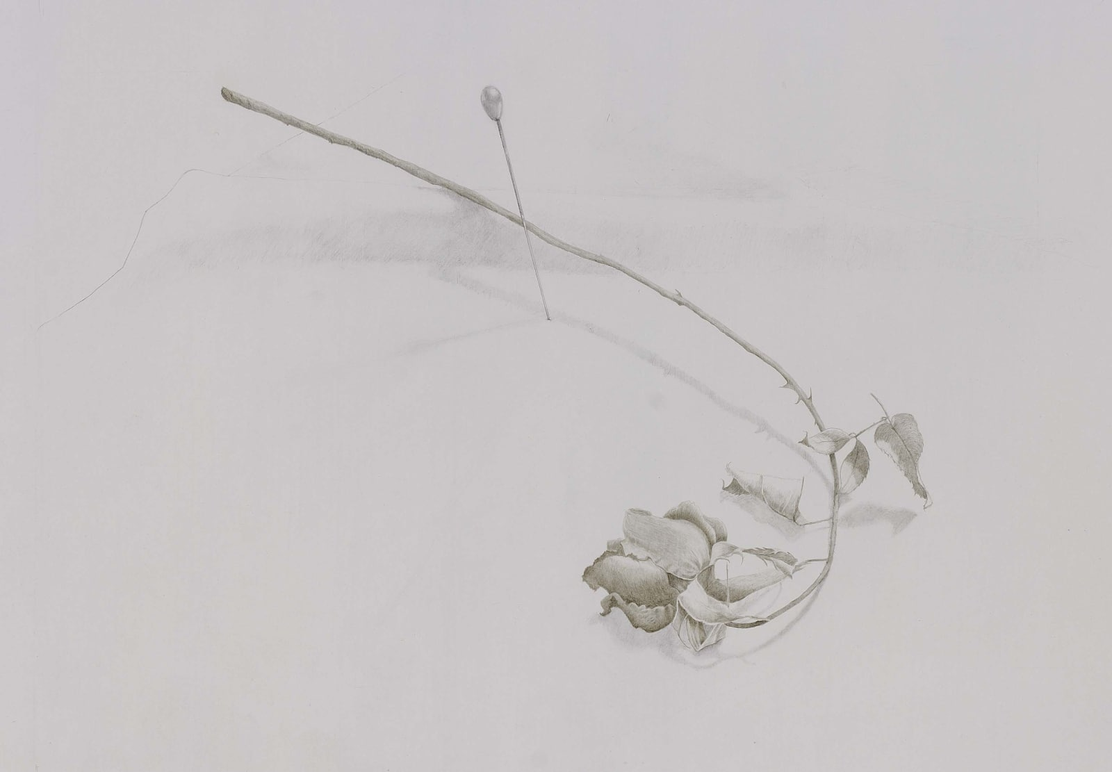 Marjorie Williams-Smith, Pin Rose, 1987