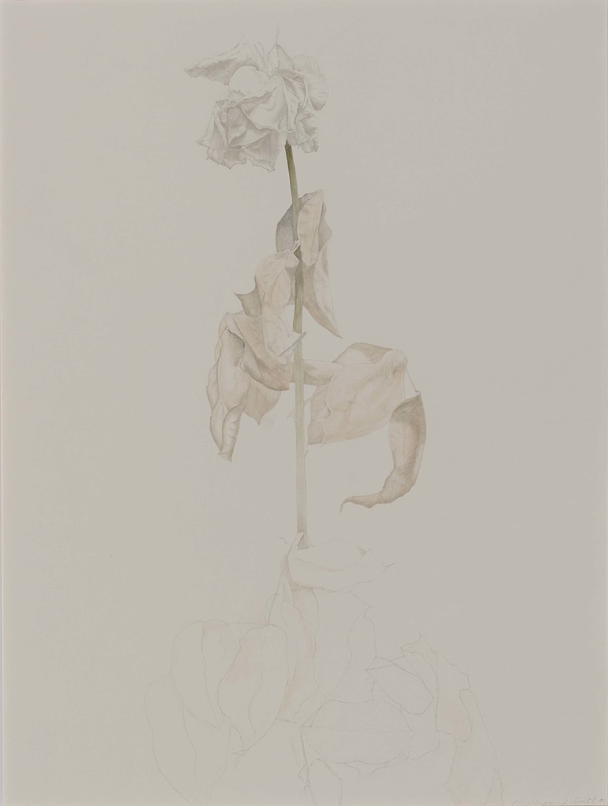 Marjorie Williams-Smith, Untitled, 1994
