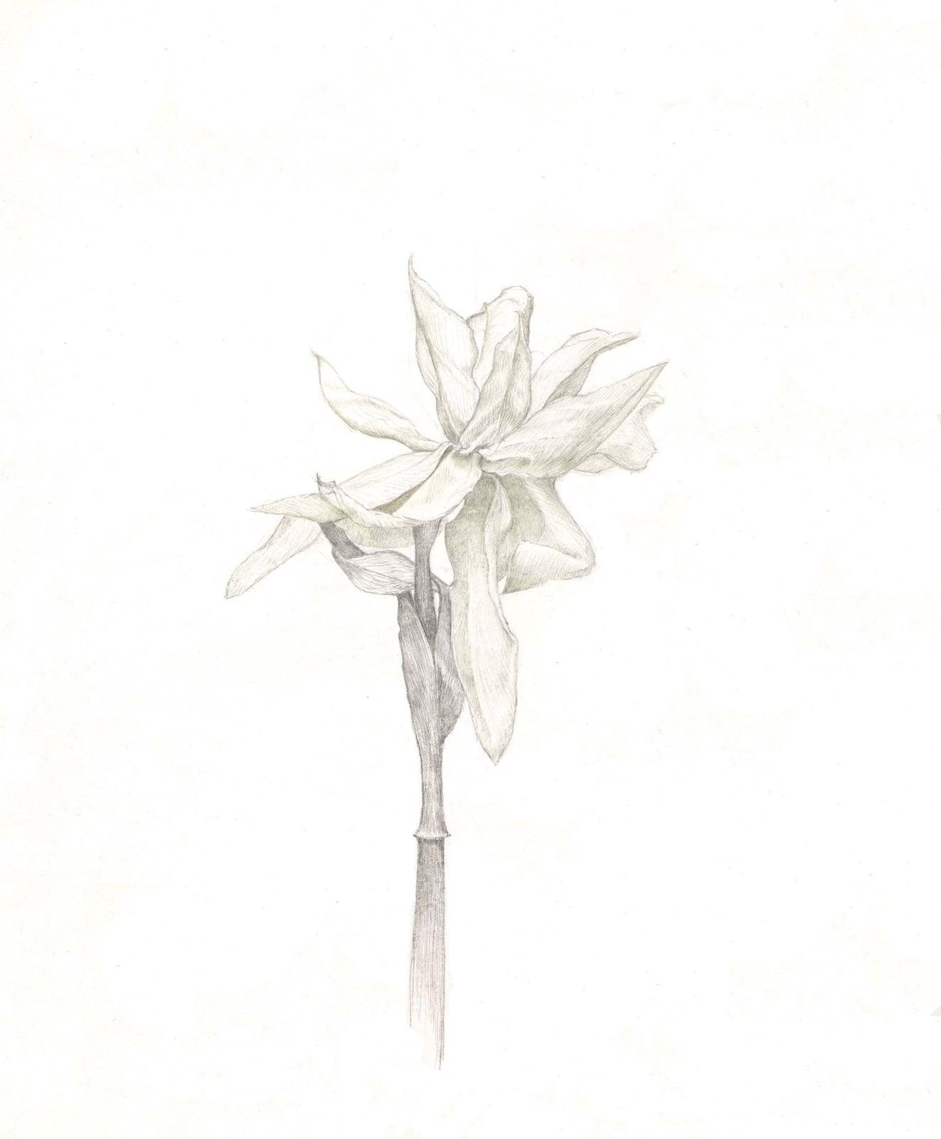 Marjorie Williams-Smith, Daffodil in Copper, 2010