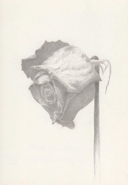 Marjorie Williams-Smith, Rose Study Facing Left , 2013