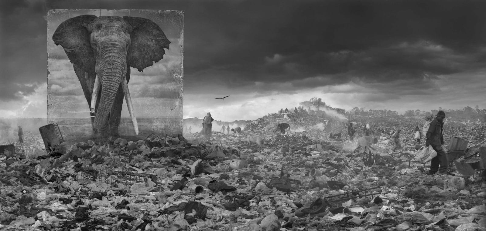Nick Brandt, Wasteland with Elephant, 2015