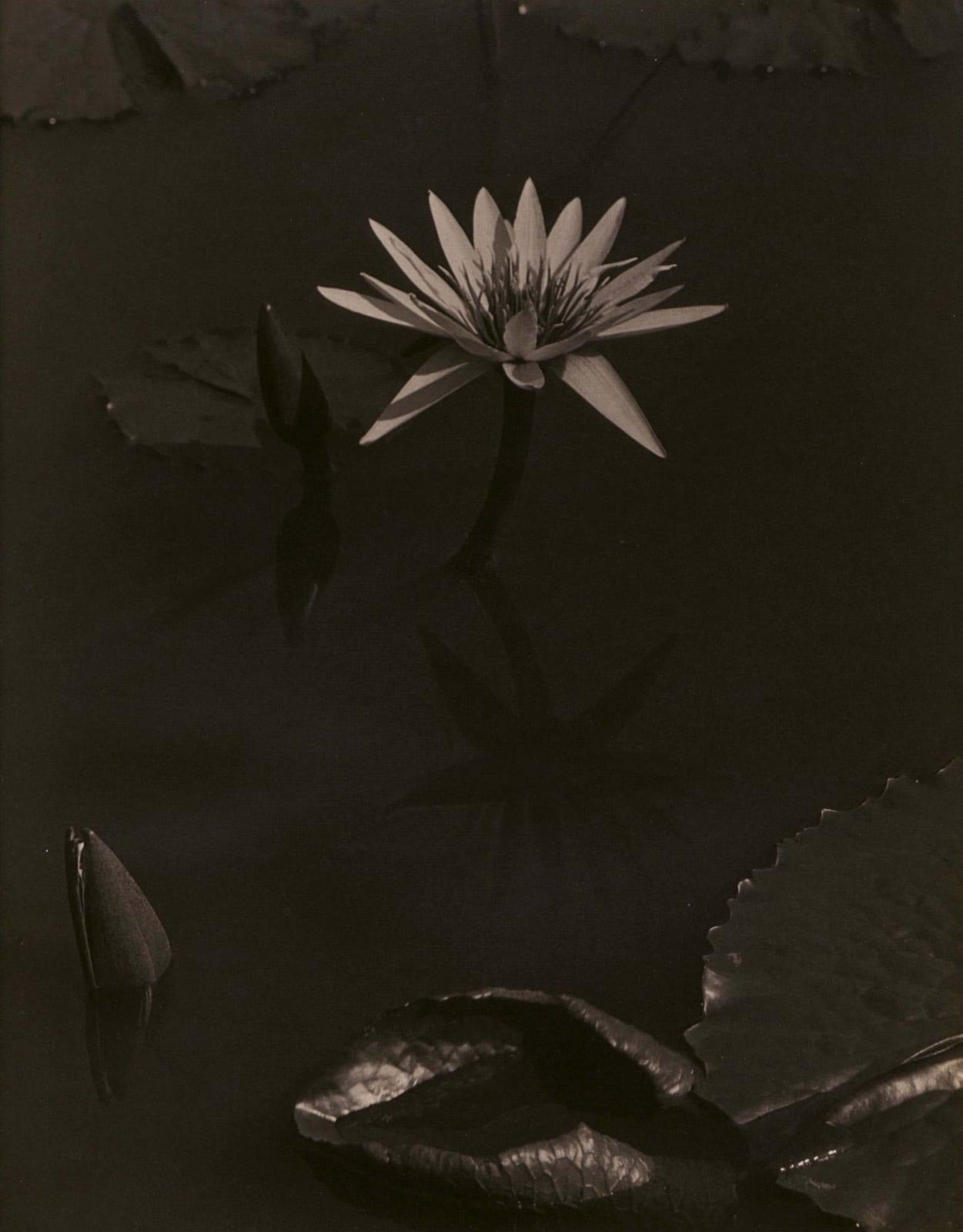 Charles Sheeler, Lily, Mount Kisco, 1918-19
