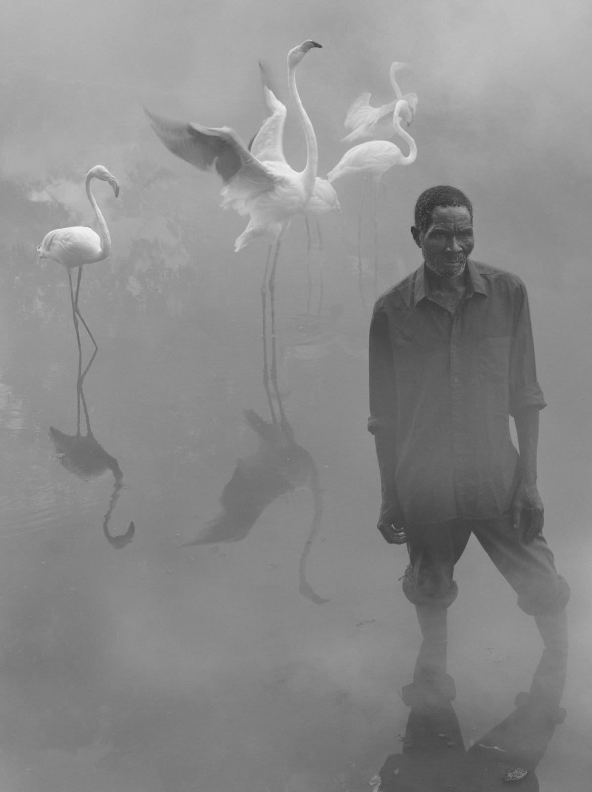Patrick standing in water with flamingos flapping wings behind him in fog, Zimbabwe, from the Day May Break series by Nick Brandt