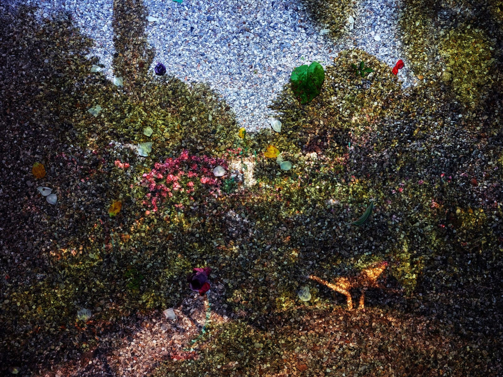 Abelardo Morell Tent Camera Image on Ground View of Monet's Gardens with Wheelbarrow Giverny France with flower petals on ground Pointillist inspired