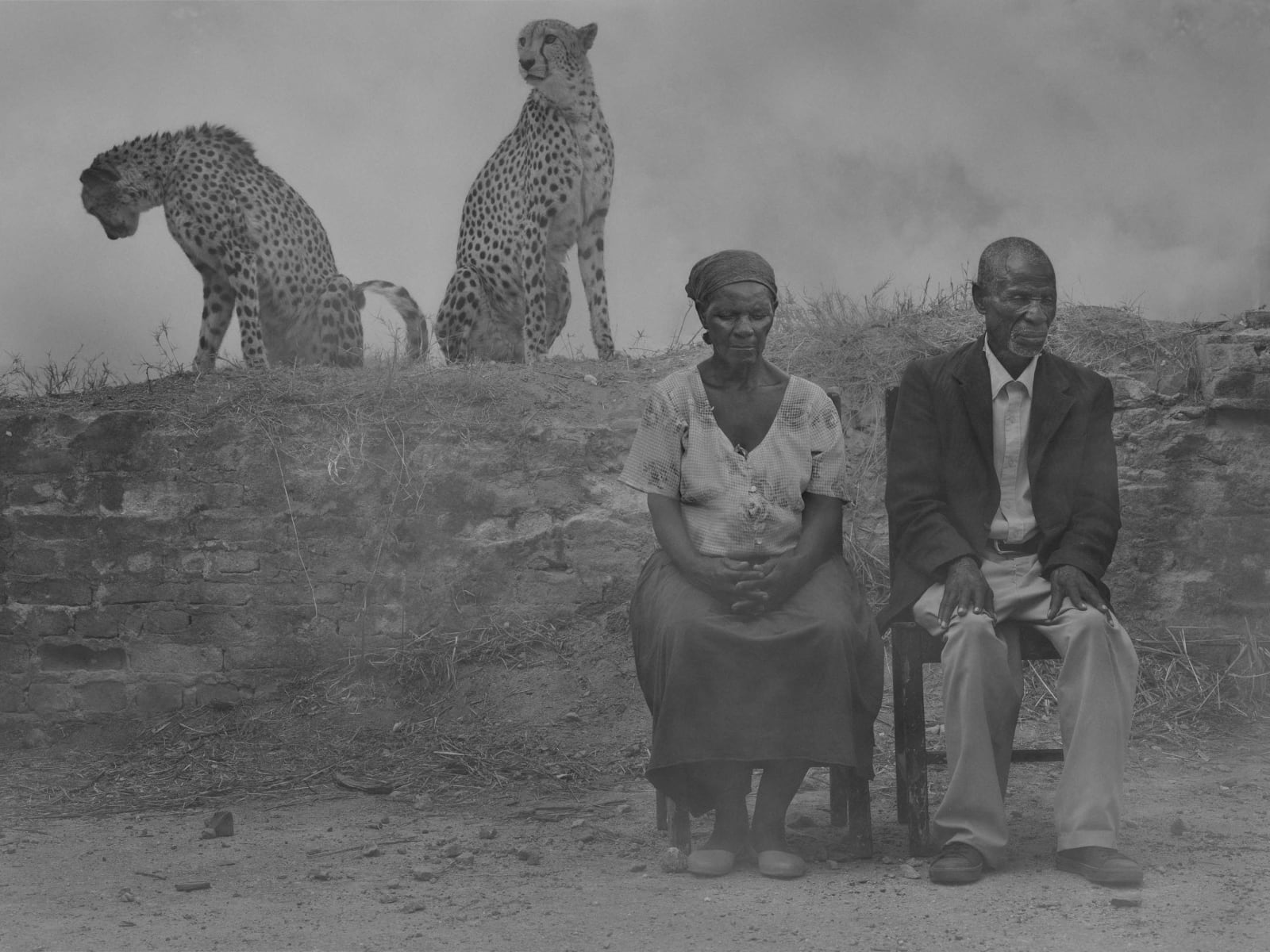 Regina and Jack sitting in chairs with cheetahs Levi and Diesel sitting behind them in fog, Zimbabwe, from the Day May Break series by Nick Brandt