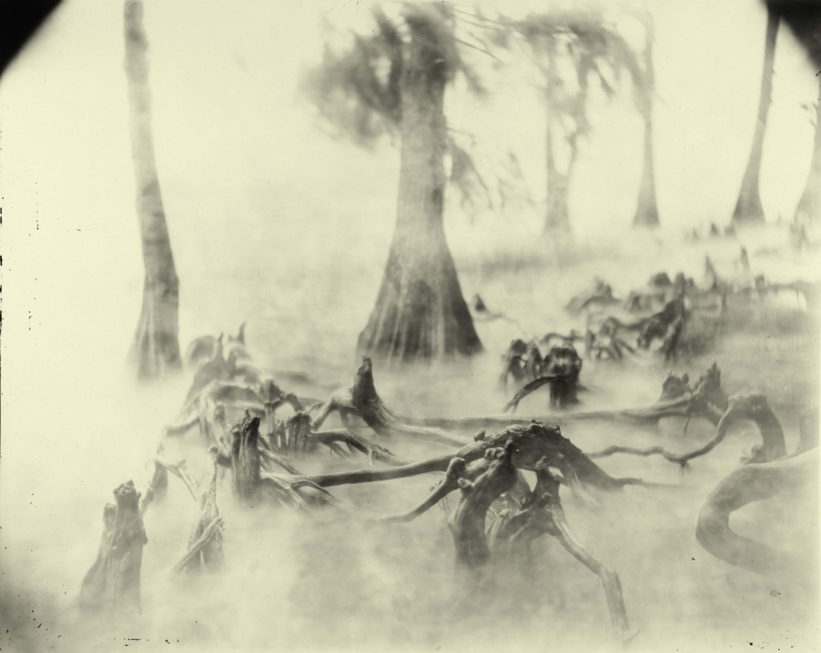 Sally Mann Deep South series, Untitled Swamp Bones, photograph of gnarled roots in swamp