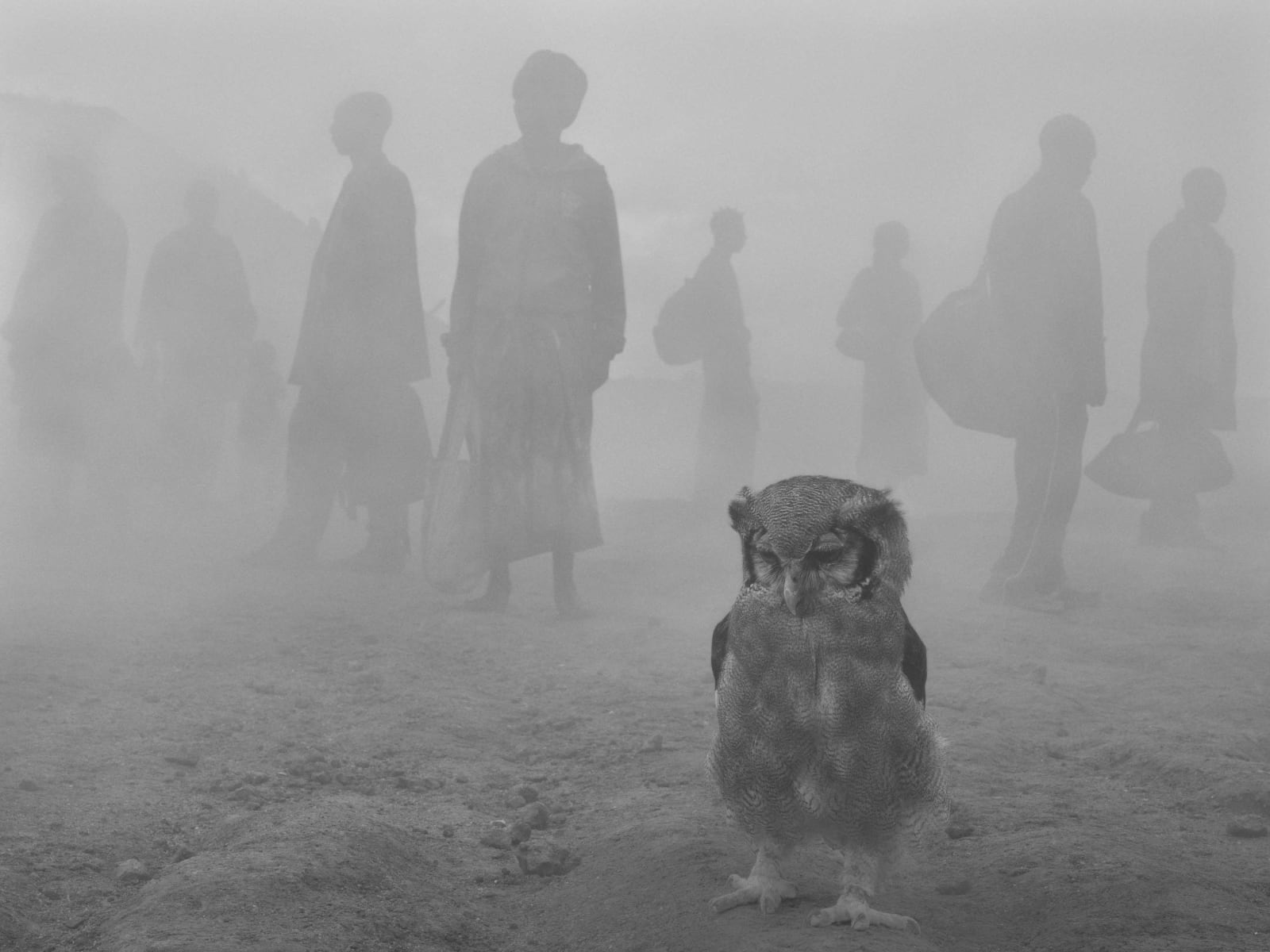 Owl named Harriet with people in fog in background, Zimbabwe, from Dawn May Break series by Nick Brandt