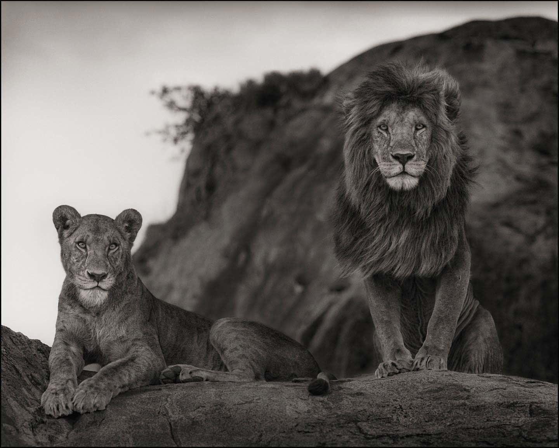 Nick Brandt, Lion Couple, Serengeti, 2010