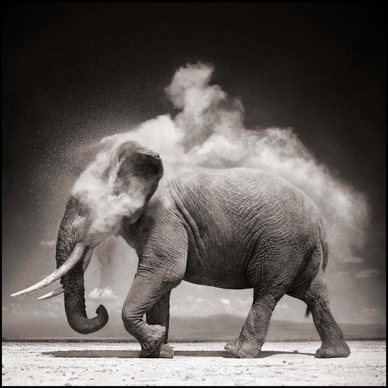Nick Brandt, Elephant with Exploding Dust, Amboseli, 2004