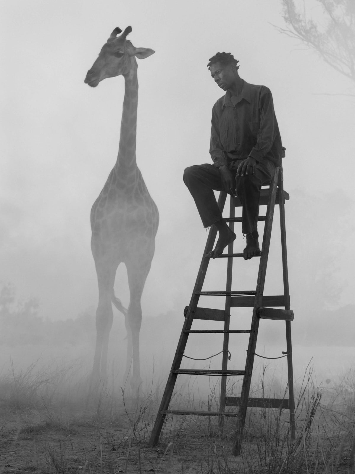 Richard sitting on ladder and a giraffe named Sky in fog, Zimbabwe, from the Day May Break series by Nick Brandt