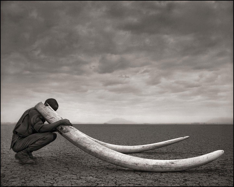 Nick Brandt, Ranger with Tusks of Killed Elephant, Amboseli, 2011