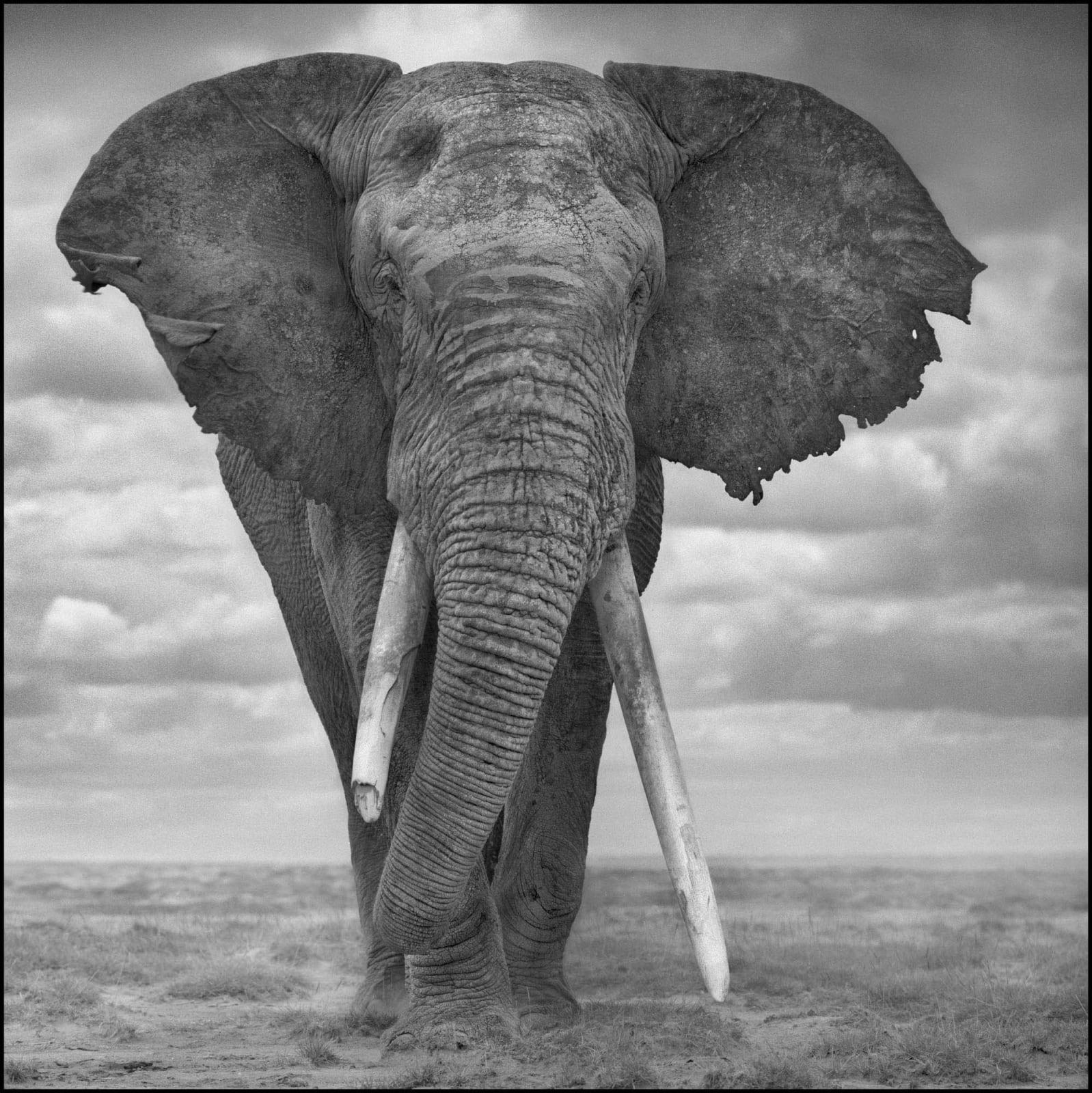 Nick Brandt, Elephant Sails, 2008