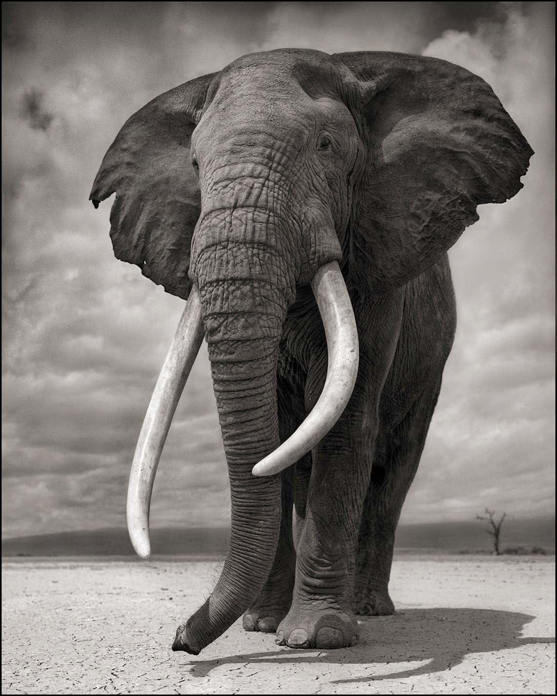 Nick Brandt photograph of elephant on bare earth, Amboseli