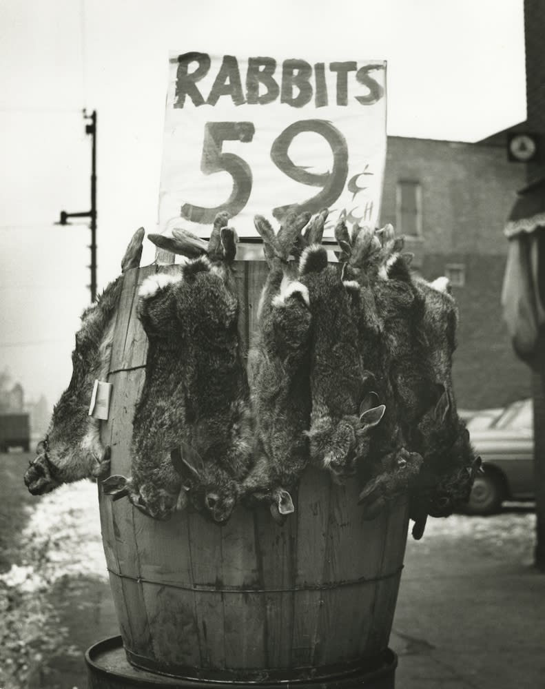 Marvin E. Newman, Rabbits, Southside, Chicago, 1951