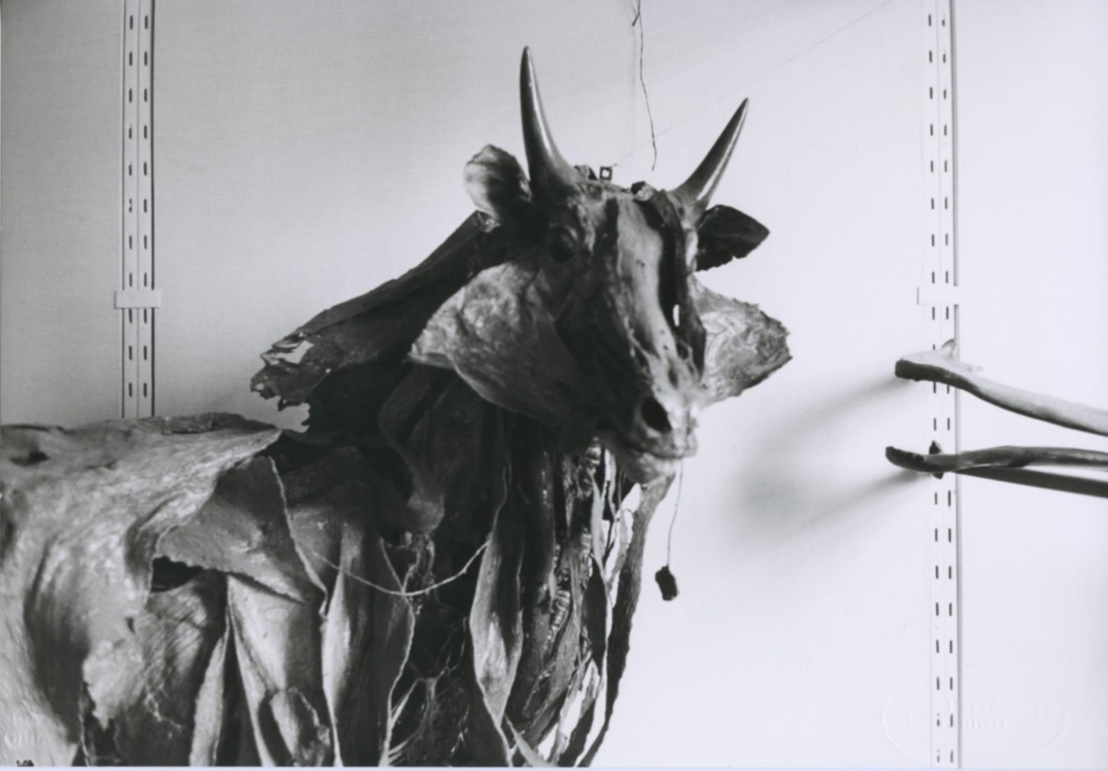 Hervé Guibert, Musée de l'École Vétérinaire, Maisons-Alfort, 1978