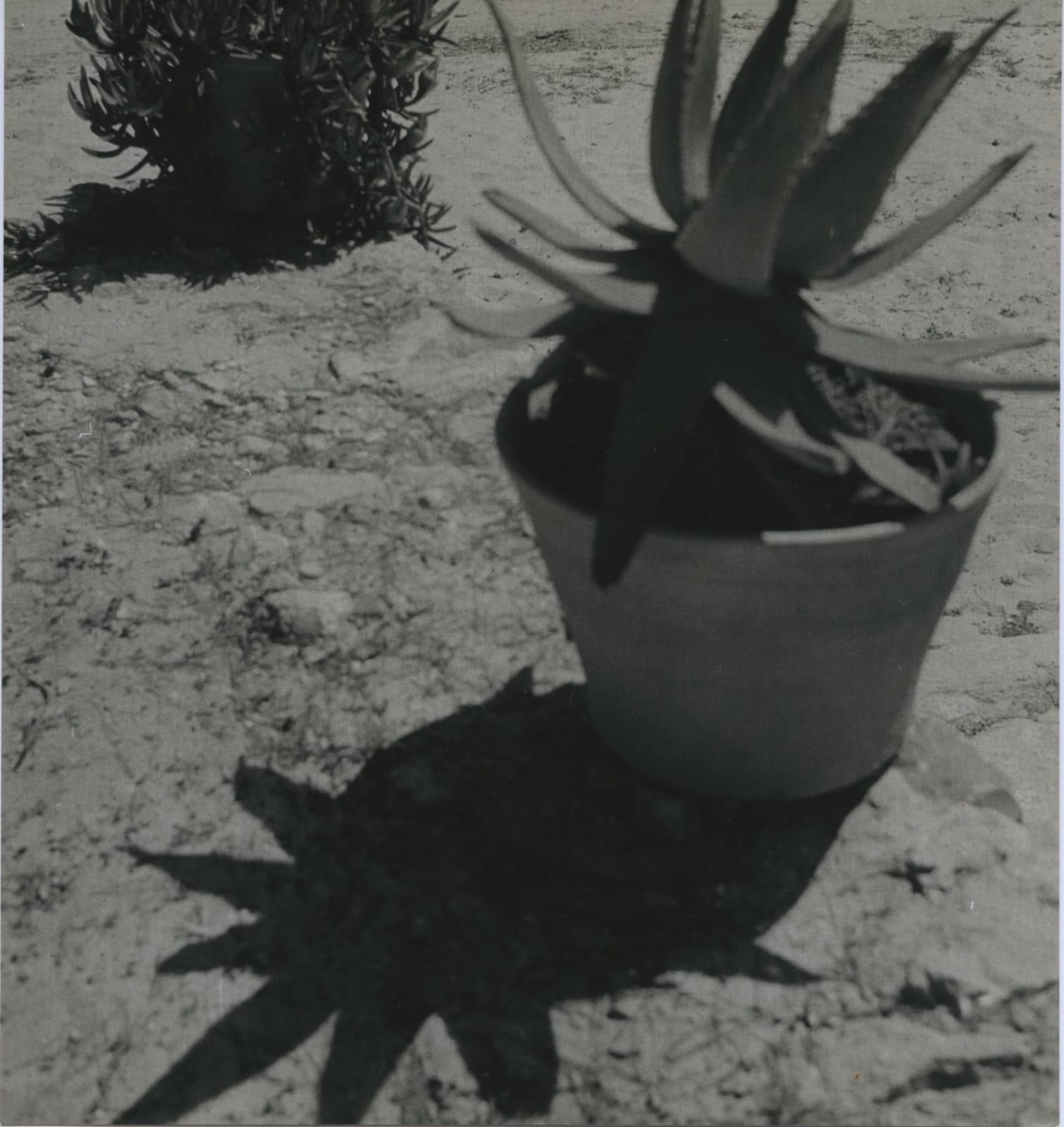 Jean Moral, Cactus, c. 1932
