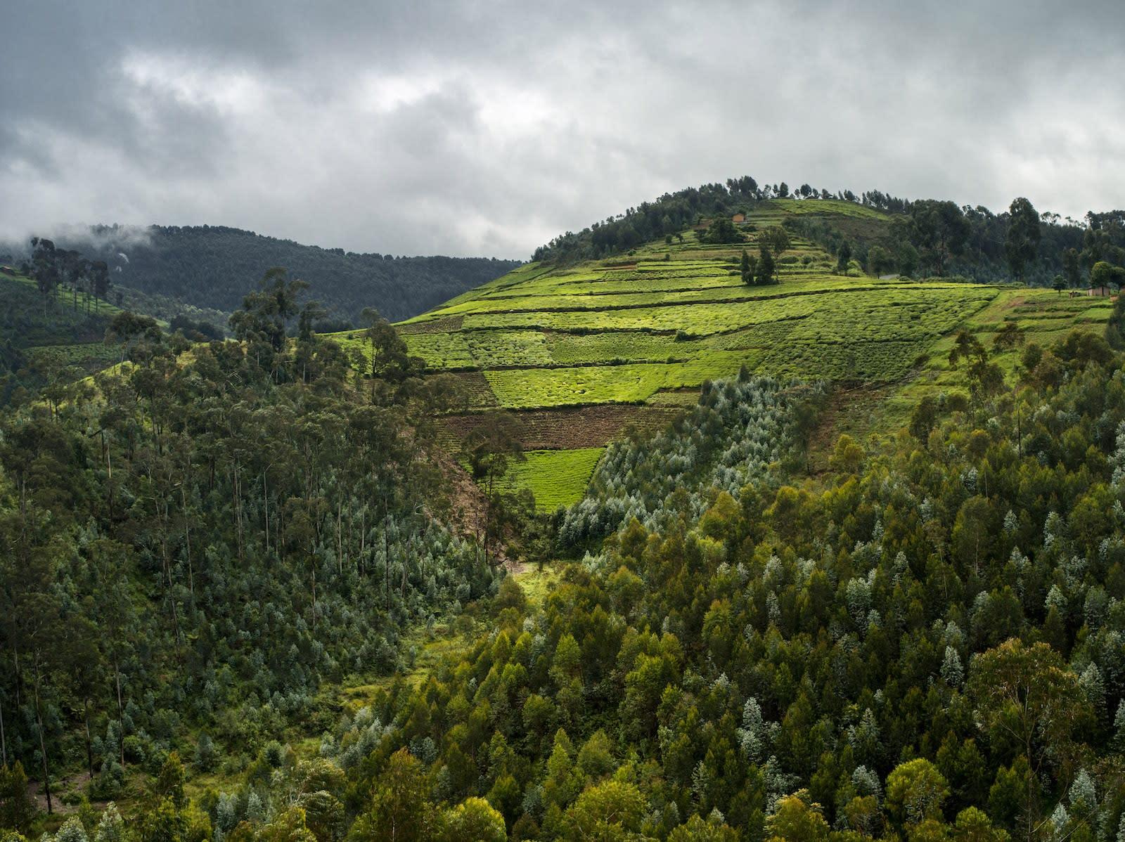 Alexis Cordesse, Sans titre, Forêt primaire de Nyungwe, Rwanda, 2013