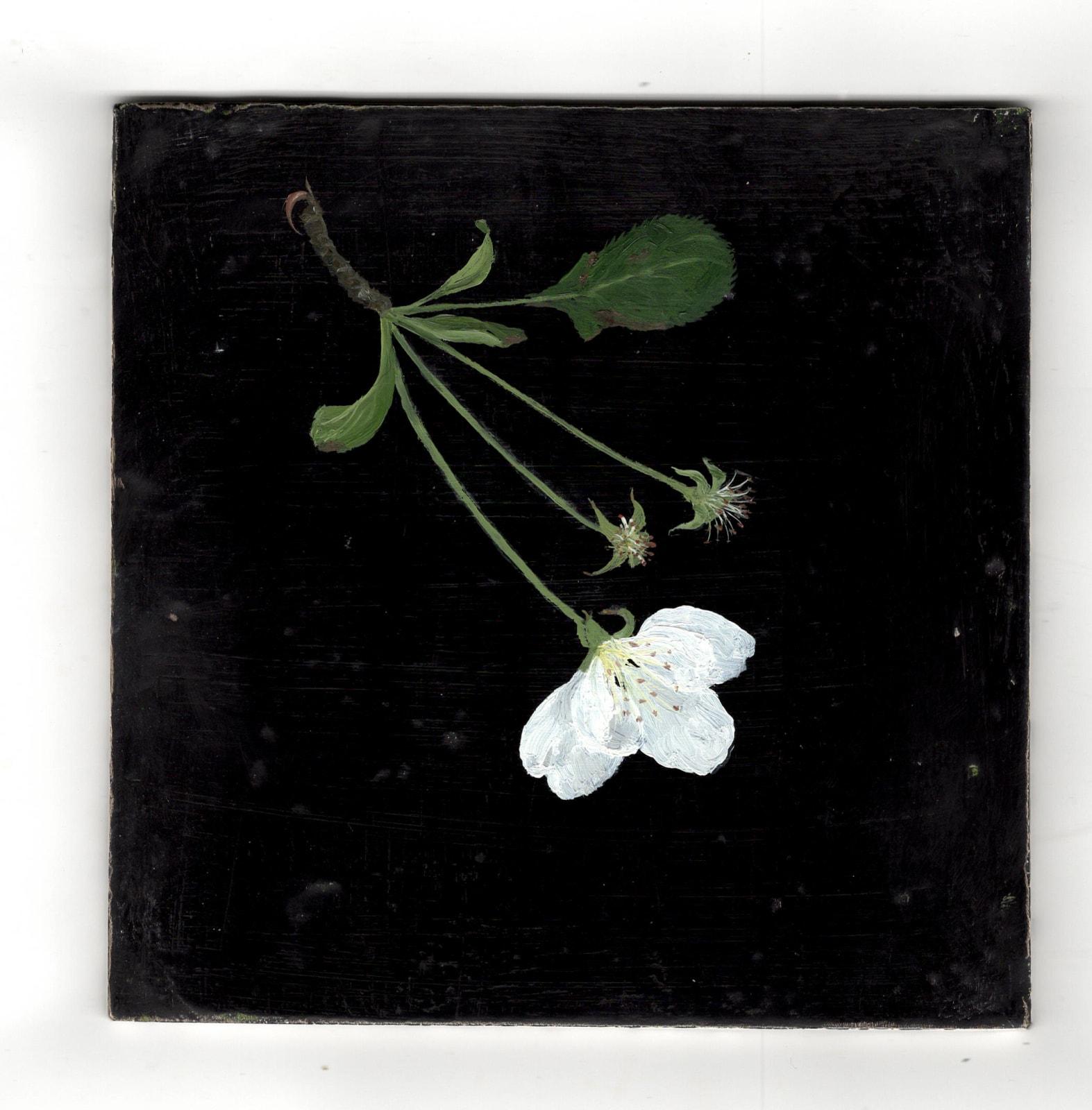 Melanie Miller, Single White Blossom, 2020