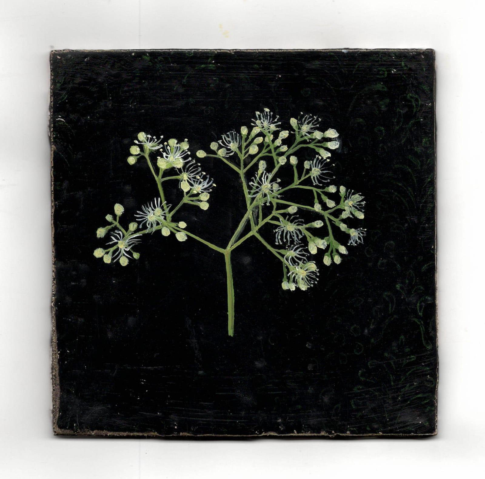 Melanie Miller, Hydrangea Buds, 2020