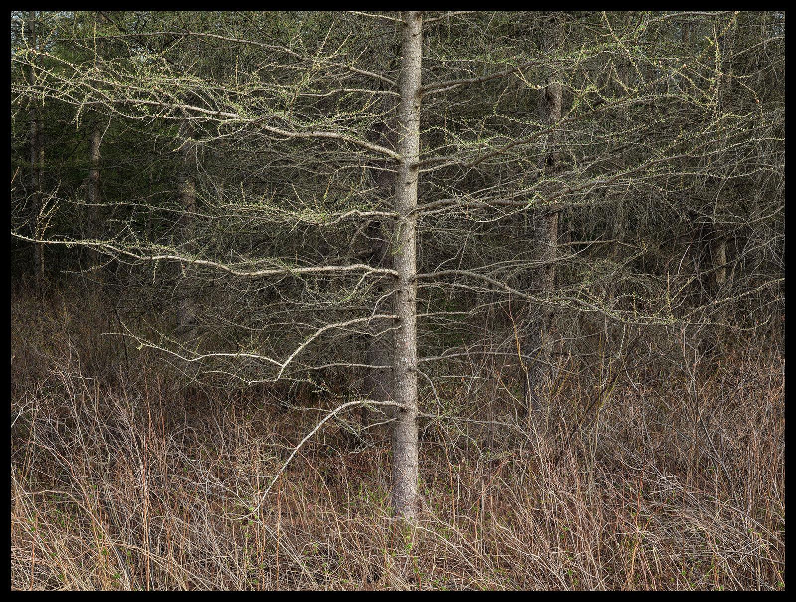 Edward Burtynsky, Natural Order #31, Grey County, Ontario, Canada, Spring, 2020