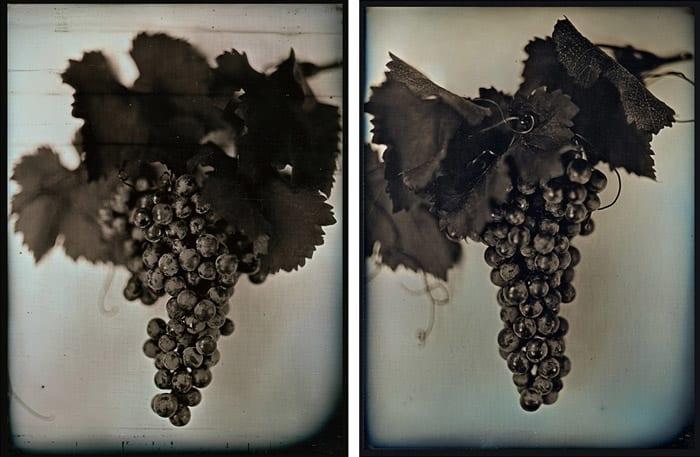 Chuck Close, Grapes, 2007