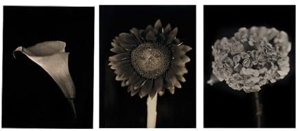 Chuck Close, Calla Lily, Sunflower, Hydrangea, 2007
