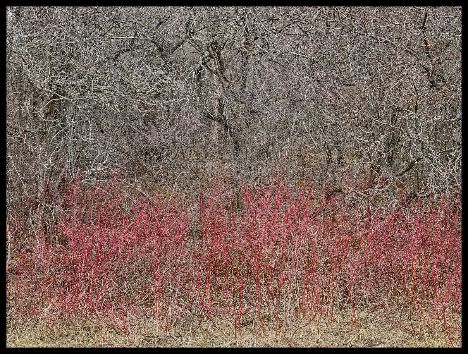 Edward Burtynsky, Natural Order #18, Grey County, Ontario, Canada, Spring, 2020