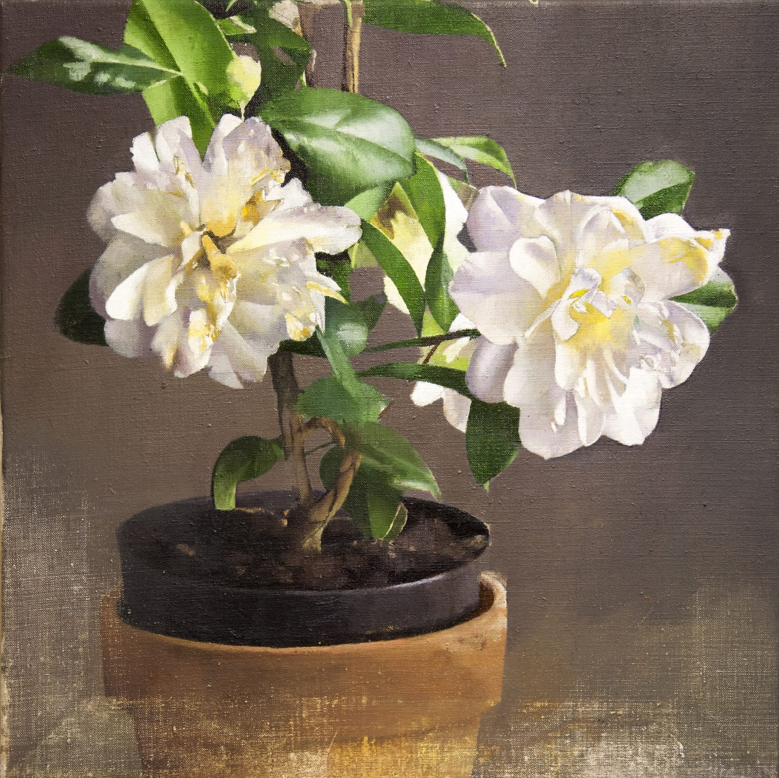 Diarmuid Kelley, Camellias, 2017