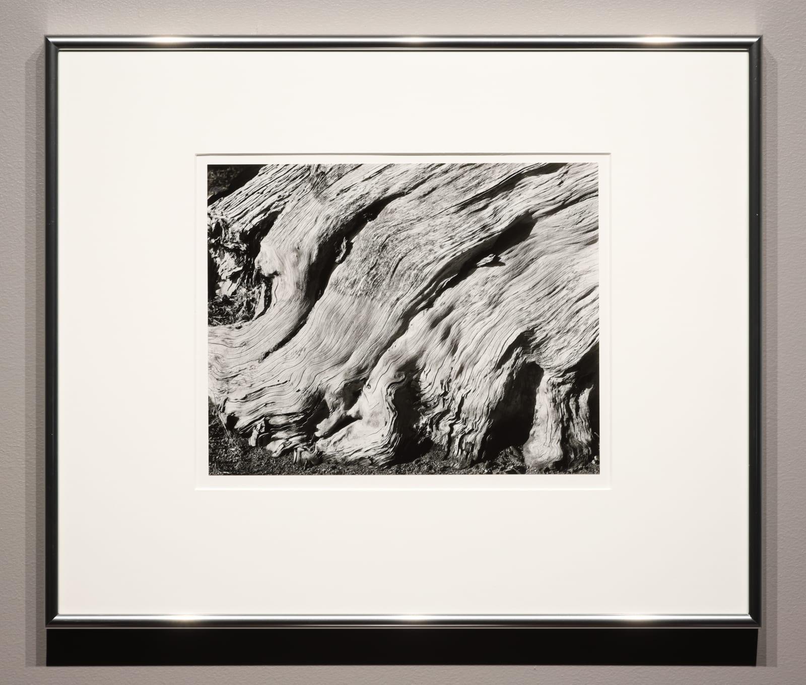 Edward Weston   Seagrave Gallery
