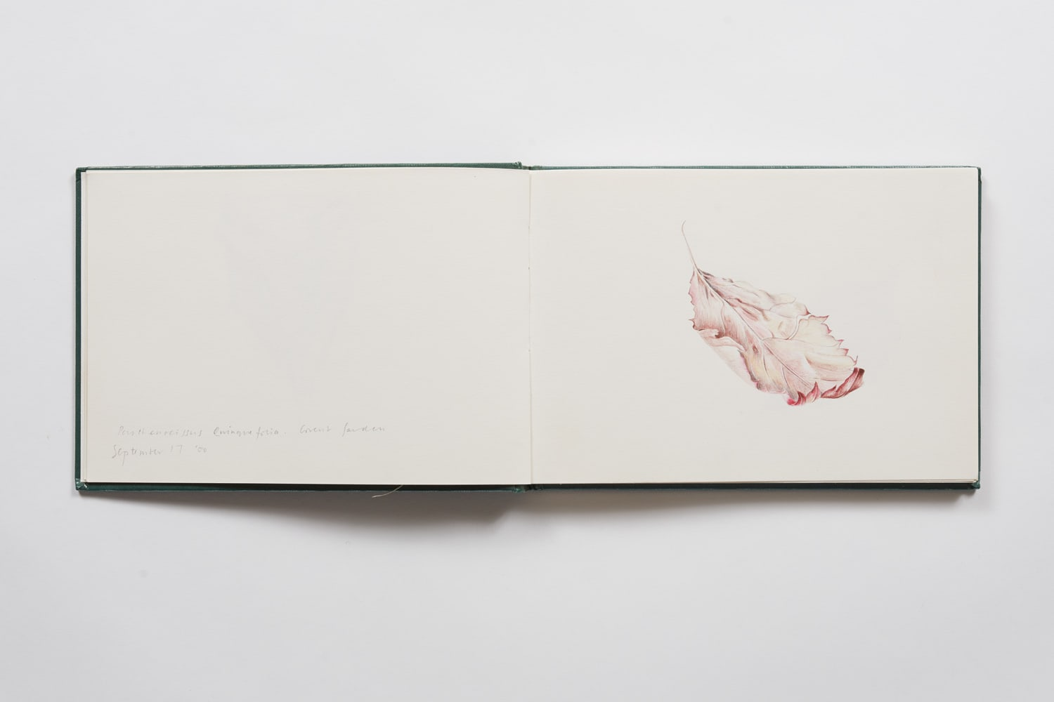 Rebecca John, A Book of Leaves I (incomplete). September 2000 – January 2007, 2000-2007
