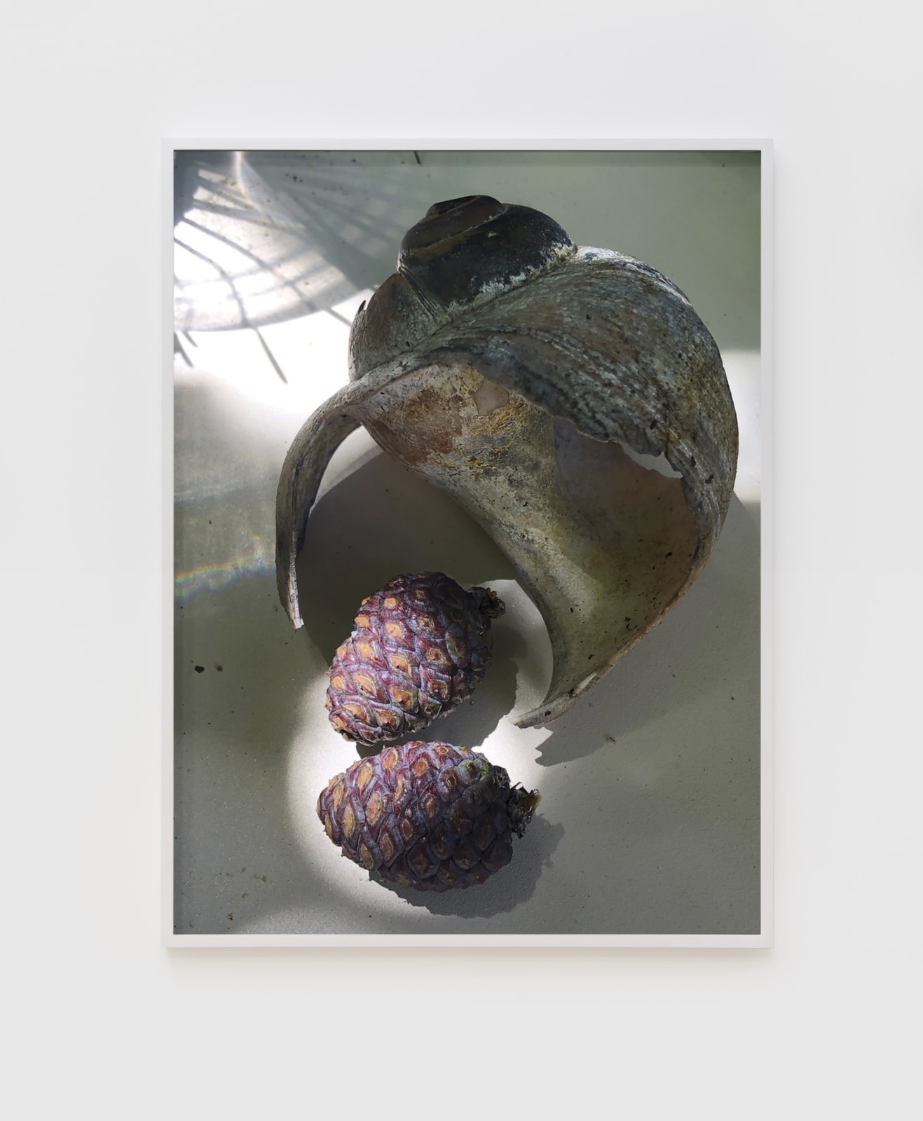 Roe Ethridge Moon Snail and Purple Pinecones , 2020 Dye sublimation print on aluminum 32 x 24 in (81.3 x 61 cm) Edition of 5, with 2 APs